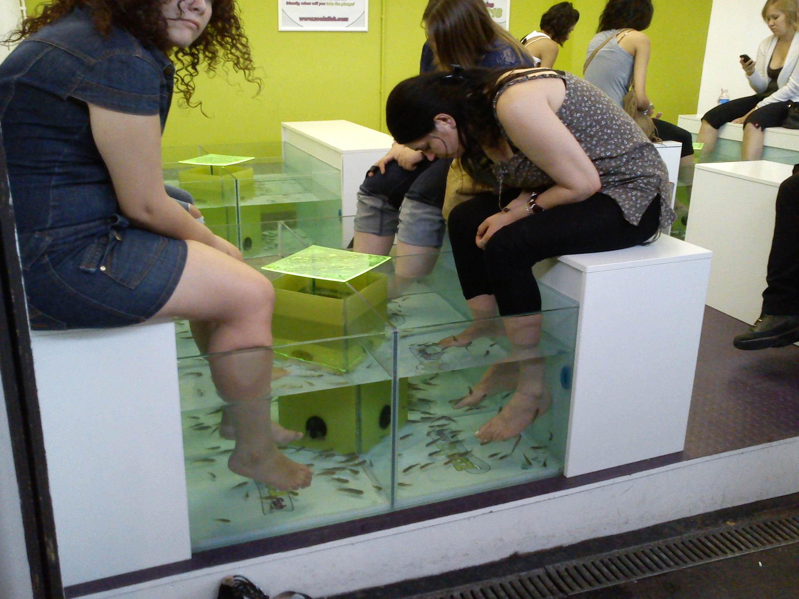 Fish pedicure all about fish for Fish pedicure dc